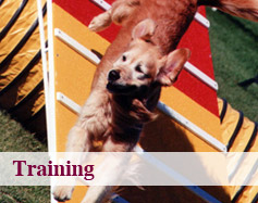Dog Training Calgary